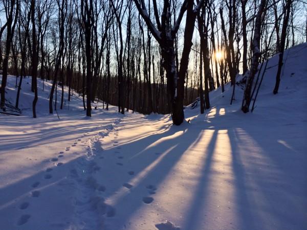 trees:sun